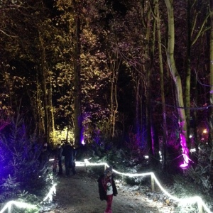 magical journey woodlands